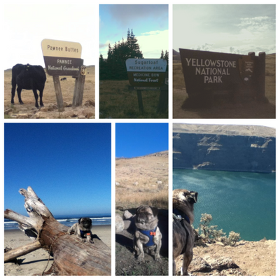 Cross-country road trip 2014 with my boyfriend and dog, Gus