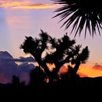 Joshua_Tree_National_Park_Association