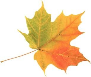 fall leaf.jpg