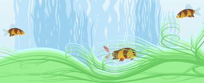 Not.Predatory-fish.png