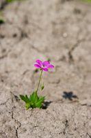 Flower Growing in Desert.jpg