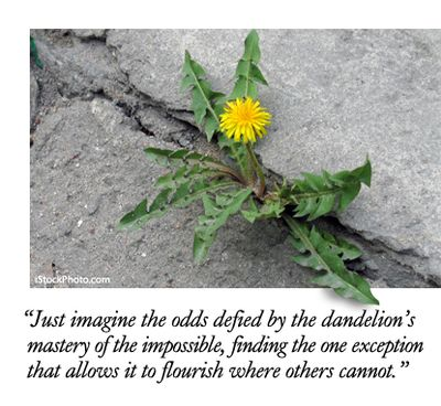 SH_weeds_article_4-2014.jpg